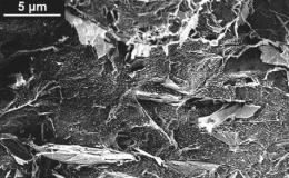 Исследование электропроводности расплавов полимерных композитов
