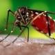 Модуль E14-440 в исследованиях слуховой системы комаров
