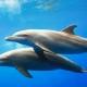 Лабораторный комплекс регистрации сигналов дельфинов